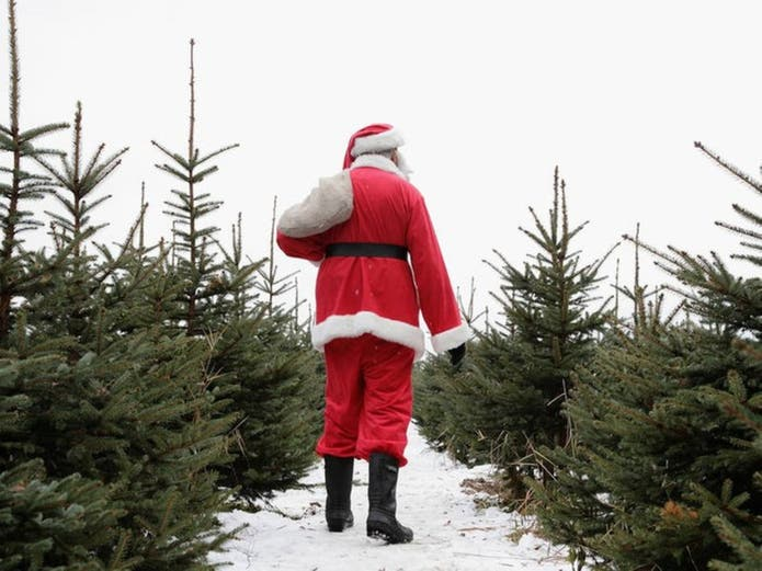 Christmas Tree Farms Near Braintree: Your 2020 Guide ...