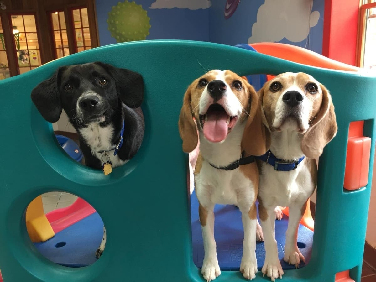 Best Friends Pet Hotel's Tips for Summer Road Trips with