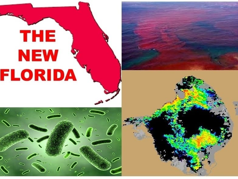 Welcome to the New Florida | St  Pete, FL Patch