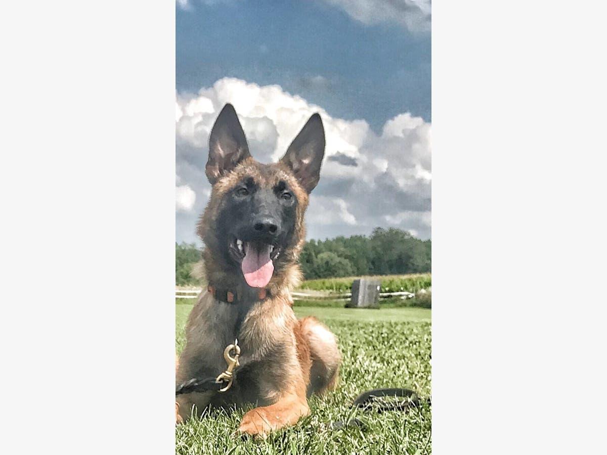 Cadaver Dog Named Bones To Join Lake Co Coroner S Office