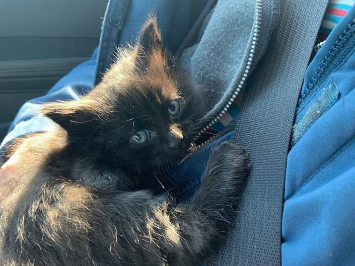 Animal Rescue Owner Helps Kittens Tossed From Car