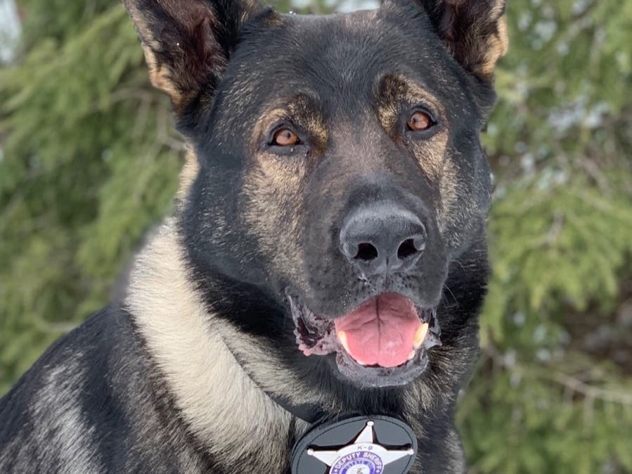 K9 Dax Named Finalist for Hero Dog National Title