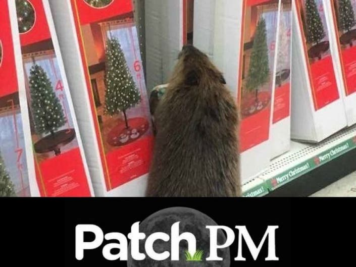 Is Dollar General Open On Christmas.Beaver Goes Christmas Shopping At Dollar General Patch Pm