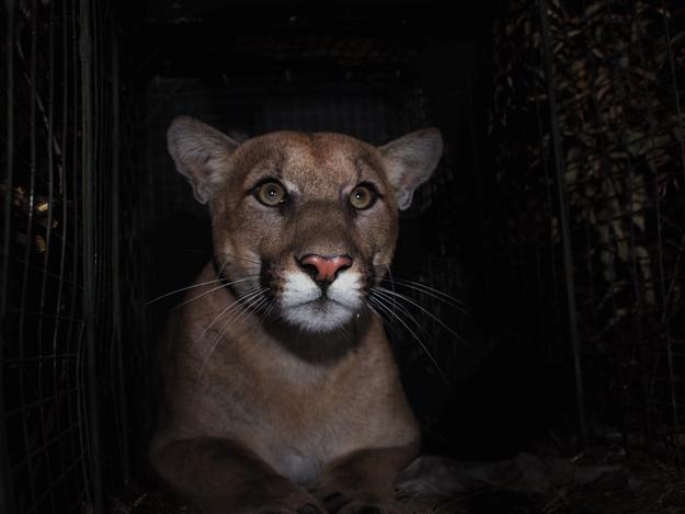 Trump Sues CA; Lion Tames 405; Actor Rescues Baby: Top CA Stories