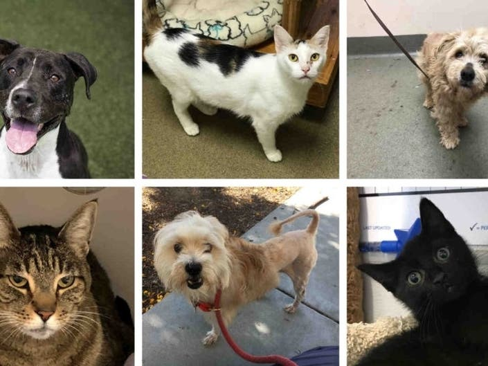Clear The Shelters Day: Help Oceanside Pets Find Forever Homes