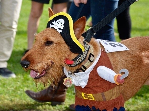 Woofstock; Boo At The Zoo; Brick-Or-Treat: SoCal Weekend