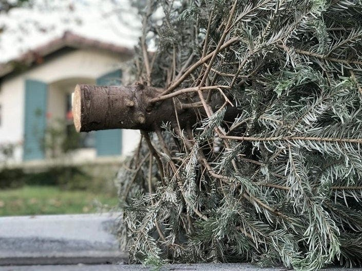 Oceanside 2020 Christmas Tree Removal Christmas Tree Pick Up In Carlsbad: How To Recycle Your Tree