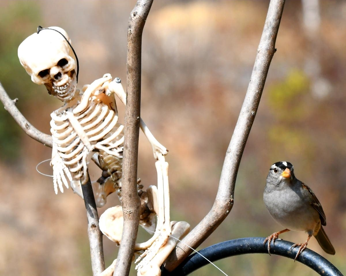 Spooktacular Birdwatching: San Diego County Photo Of The Day