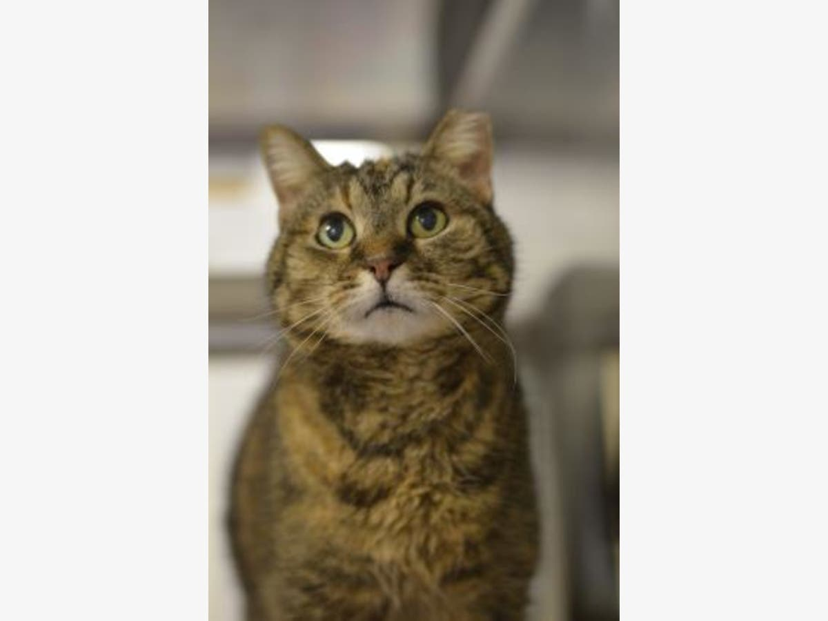 Free Cats And Kittens At Humane Society Of Harford County Bel Air Md Patch