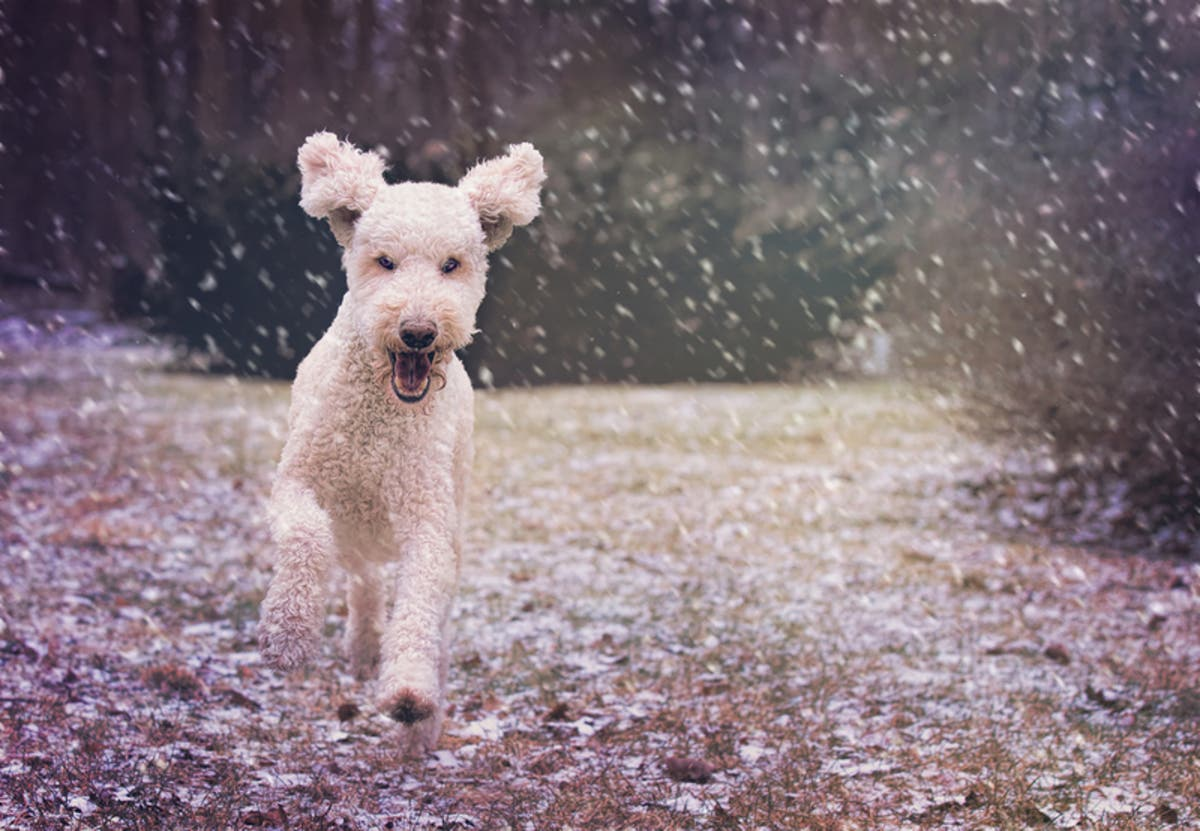 2019 Virginia, DC Winter Weather Forecast | Reston, VA Patch