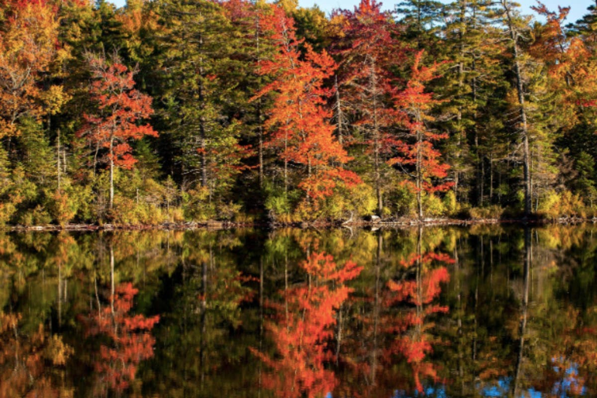 New York Fall Foliage 2020 Predictions.Fall Foliage Map 2018 When Autumn Leaves Peak In New York