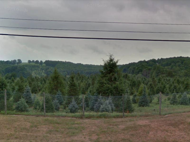 Cut Your Own Christmas Tree In Hudson Valley