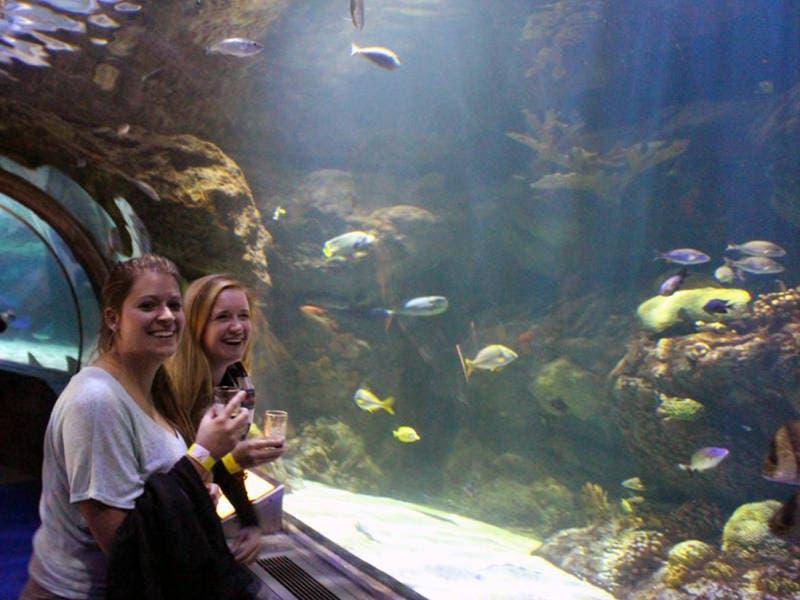 Sea Life Michigan Aquarium Tickets