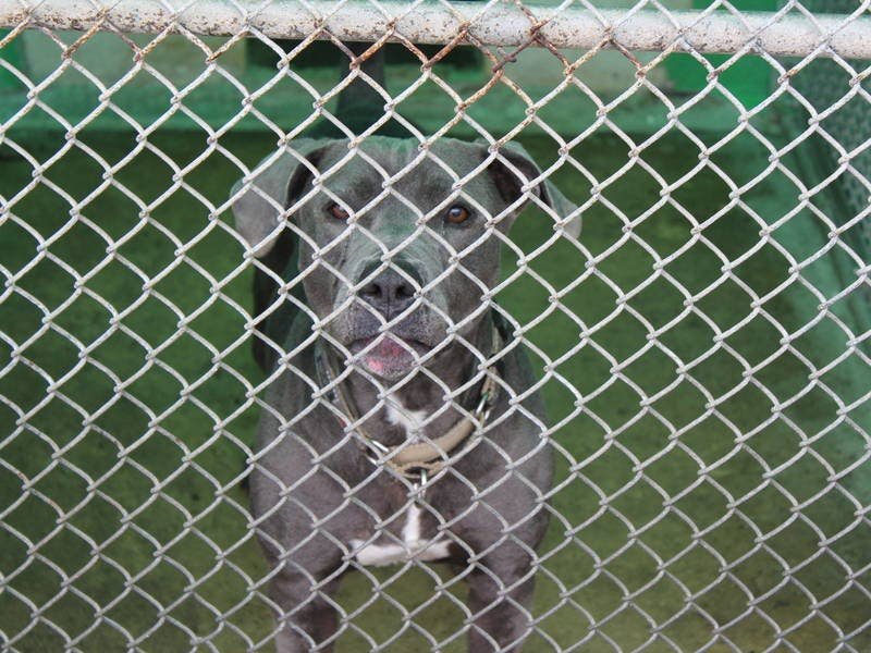 Hi Tor Wont Take Animals From Spring Valley New City Ny Patch