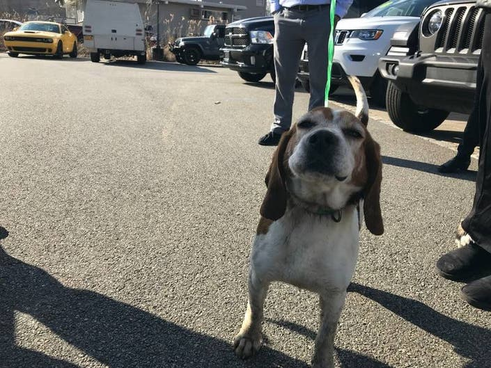 Injured Beagles Owner Charged With Animal Cruelty