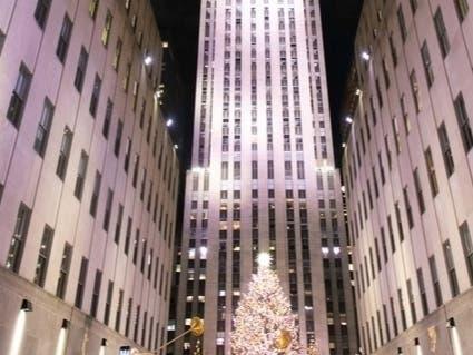 Florida Tree Will Be Rockefeller Centers Christmas Showpiece