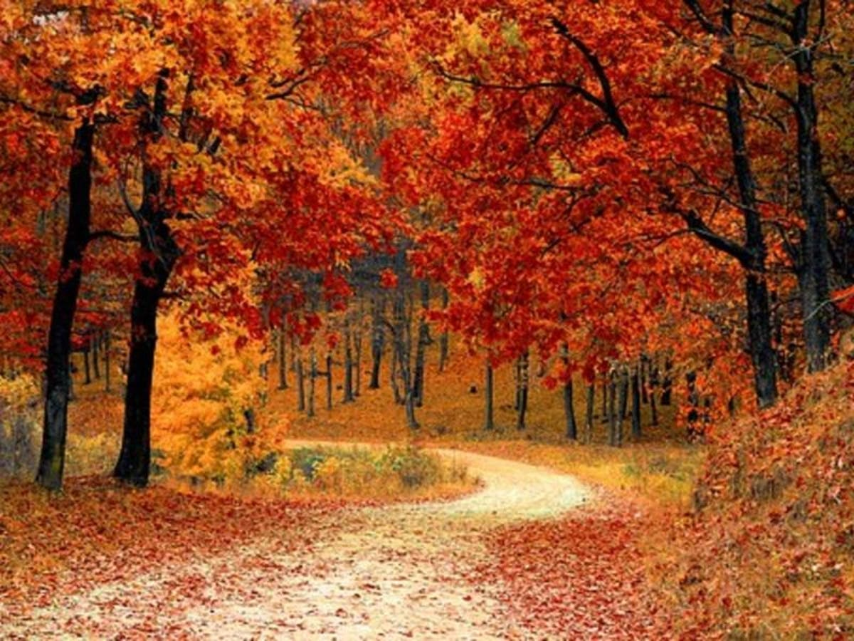 Fall Tree Pruning Can Wait | Elite Tree Care