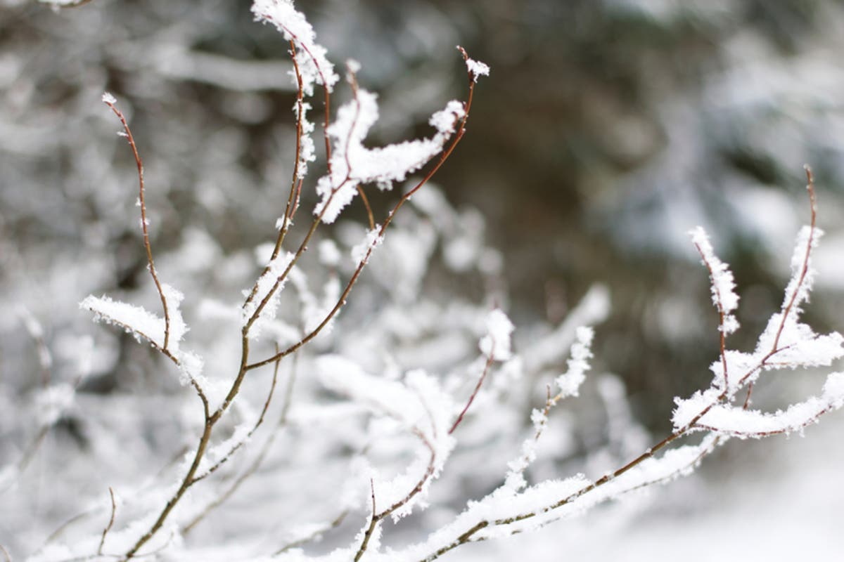 Cold Wintry Mix Or Warm Almanacs Disagree On Ga Winter Forecast Atlanta Ga Patch,Shade Landscaping Ideas Front Of House