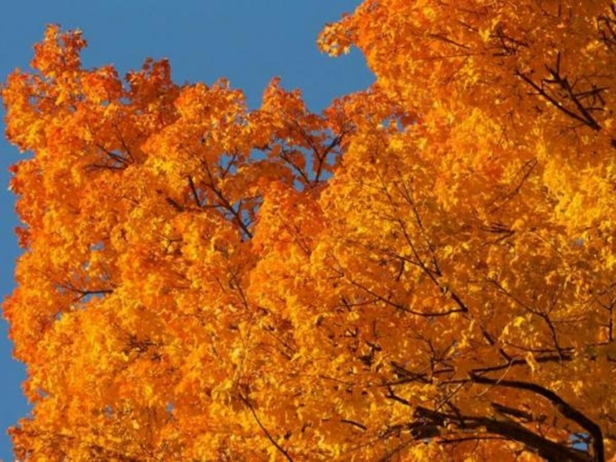 Fall Foliage Map 2018 When Autumn Leaves Peak In Georgia