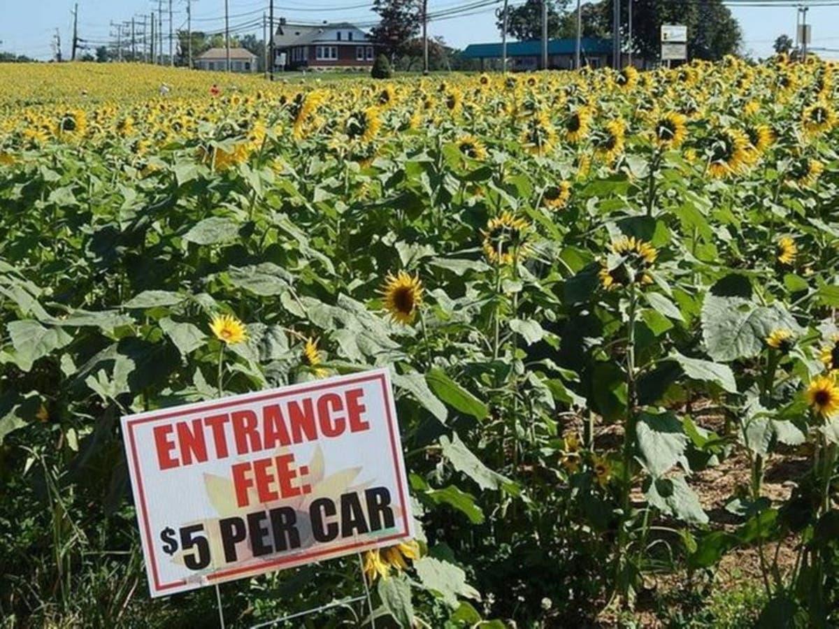 Good News: Blue Ribbon Schools, MD Billionaires, Sunflower