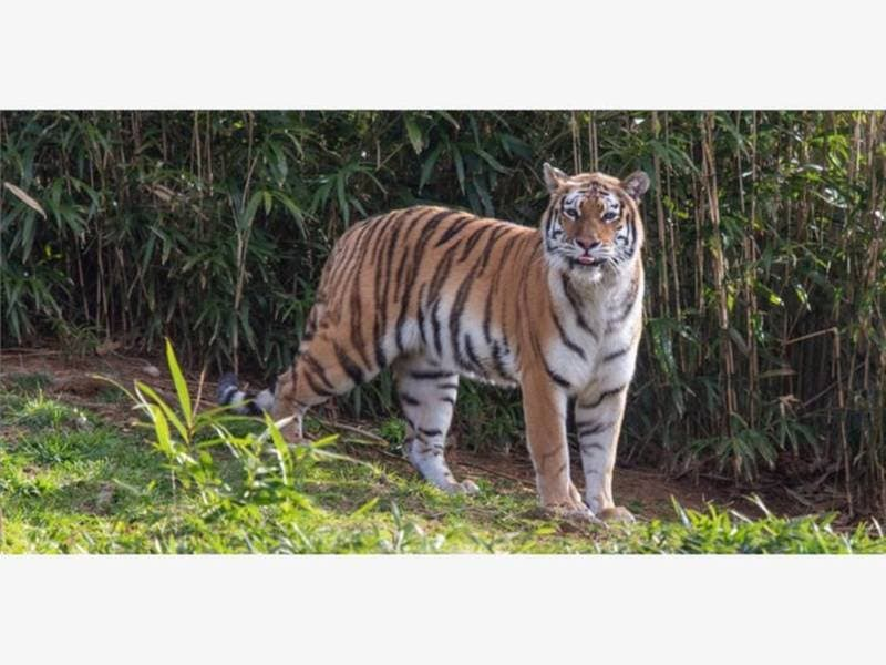 Gourmet Toast, Zoo Saves Tiger, Amazon Incentives: News Nearby