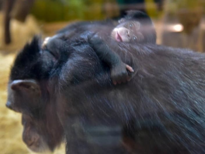 MD Good News: Baby Chimp Debuts, Sunflower Peak, Nicest Place