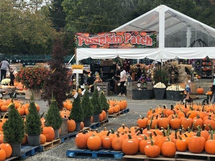 Ellicott City Halloween 2020 Best Maryland Pumpkin Patches, Halloween Events 2020 | Across