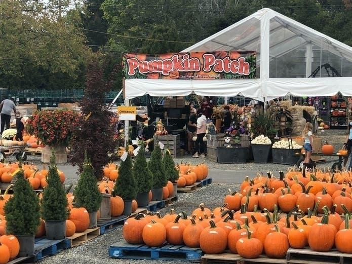 Local Halloween Events 2020 Best Maryland Pumpkin Patches, Halloween Events 2020 | Across