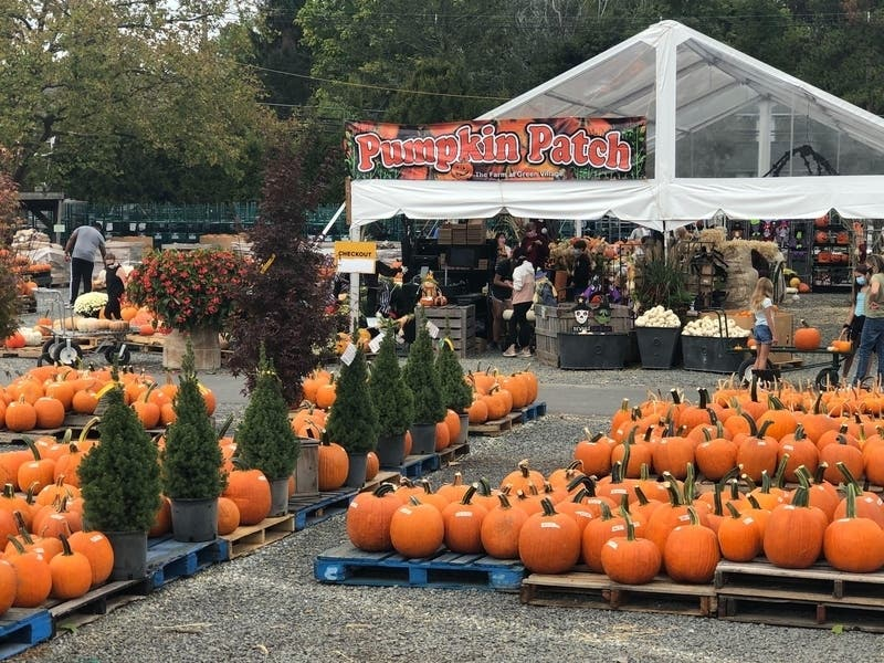 Halloween 2020 Dc Area Events Best NoVA, DC Pumpkin Patches, Halloween Events 2020 | Across