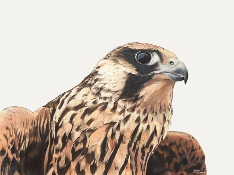"""""""Birds of Prey"""" Original Art Exhibit at the EEC   Basking ..."""