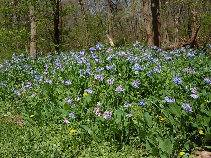 Garden Disciovery Trips at the EEC