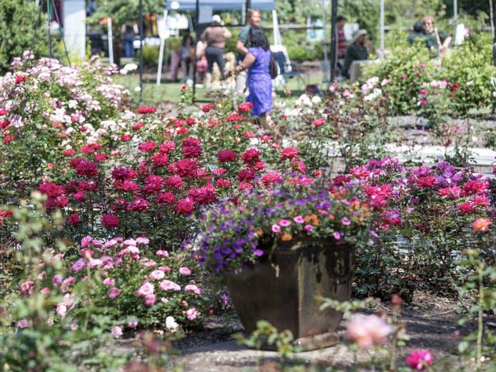 Rudolf W. van der Goot Rose Garden