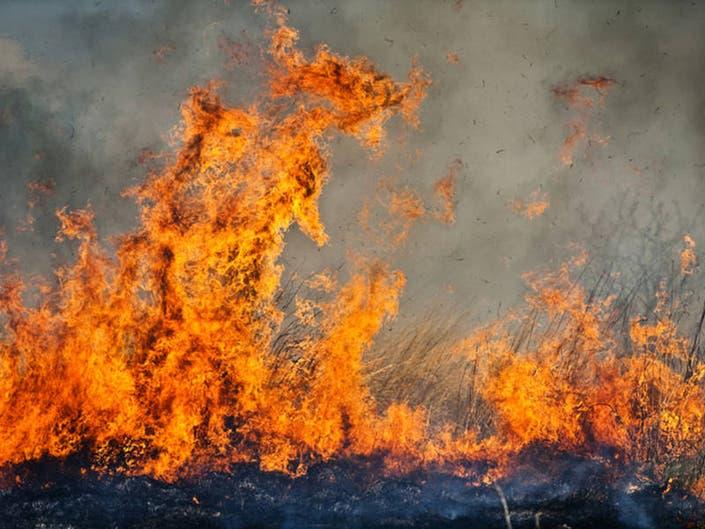 Brush Fire Breaks Out Alongside 118 Freeway
