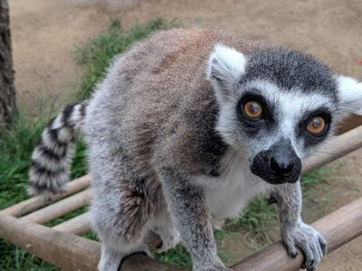 Lemurs 15 Minutes | Man Trapped In Sewage Pipe | Patch PM