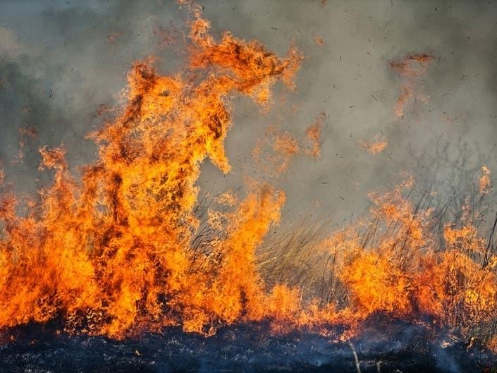 Brush Fire Breaks Out Near 110 Freeway