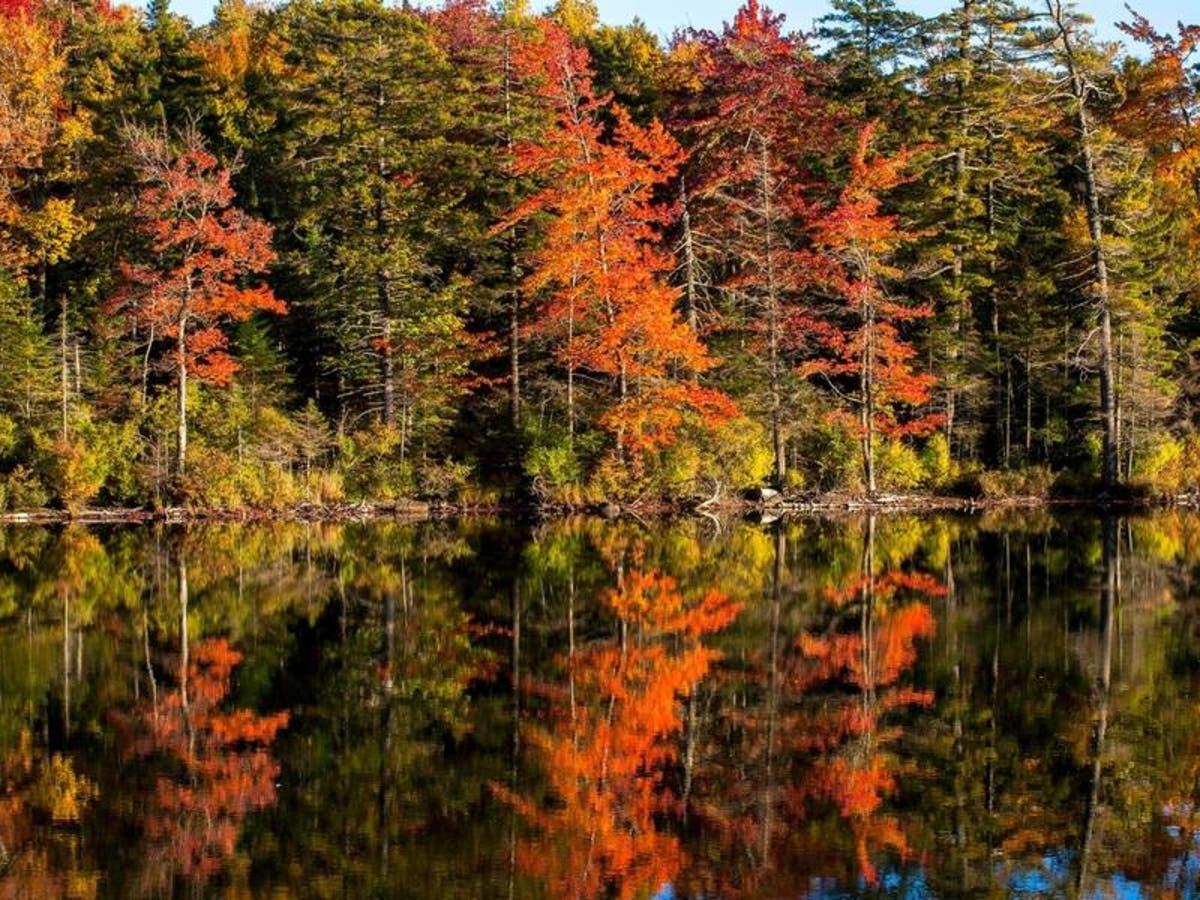 fall colors in michigan 2020 map
