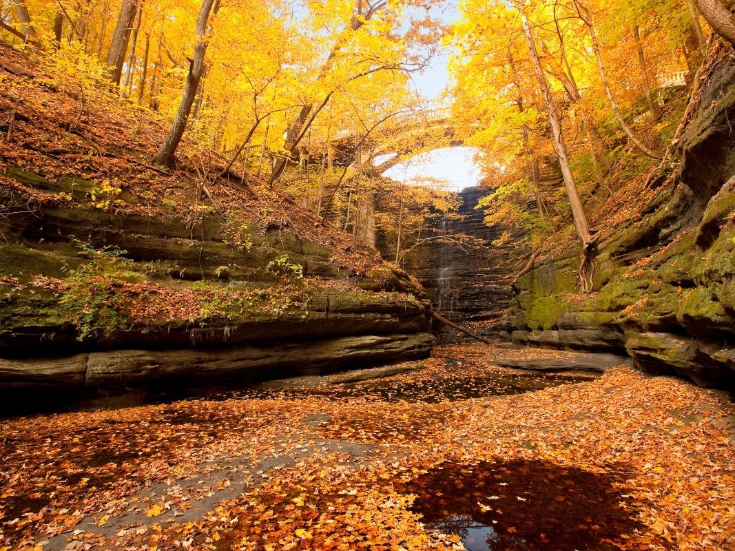20 Fall Foliage Peak Map When Leaves Are Best In Illinois ...
