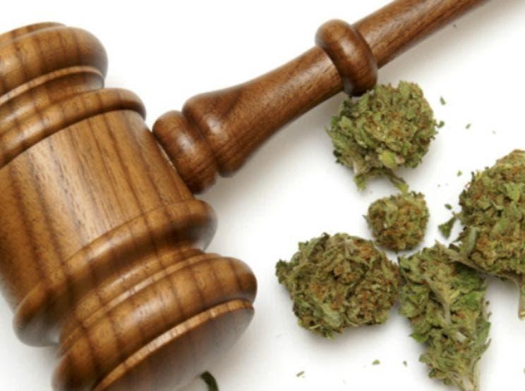 Ferndale Pot Activist Goes to Jail For (Wait For It) Pot