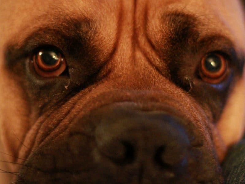 Horrible Hundred' Puppy Mills: Michigan Ranking On HSUS List