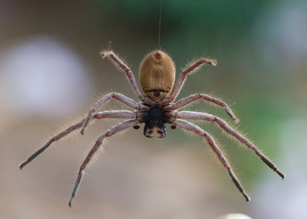 Michigan Mom Finds Giant Creepy Spider In Toddler S Bedroom Video Detroit Mi Patch