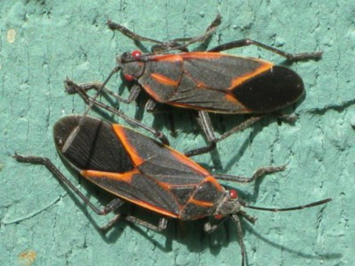 7 Bugs, Including Stink Bugs, Crawling In Your House Right