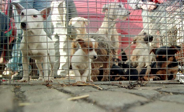 Horrible Hundred Puppy Mill List Lacks Critical USDA