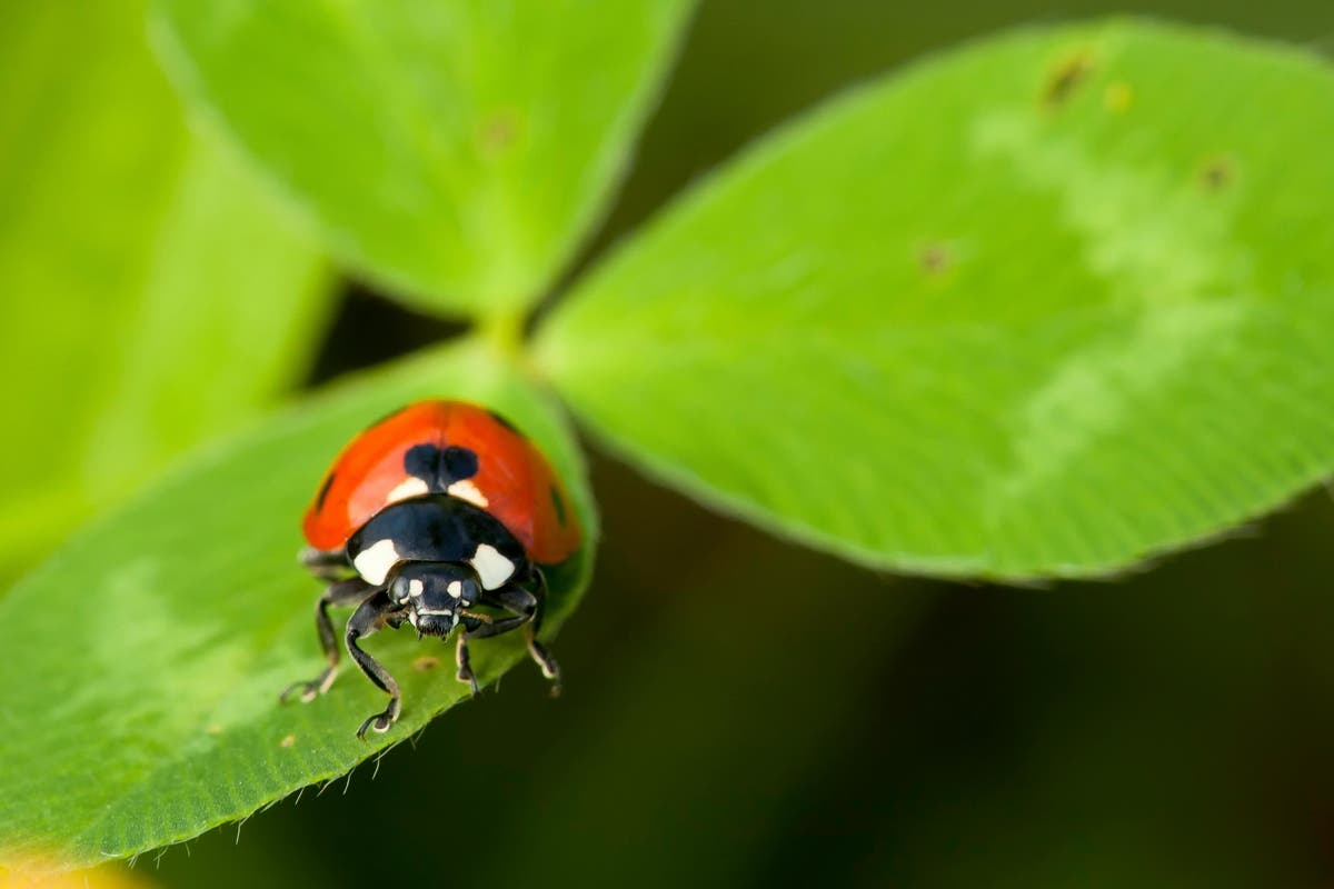 Stink Bugs, 6 More Fall Invaders Crawling In Your House