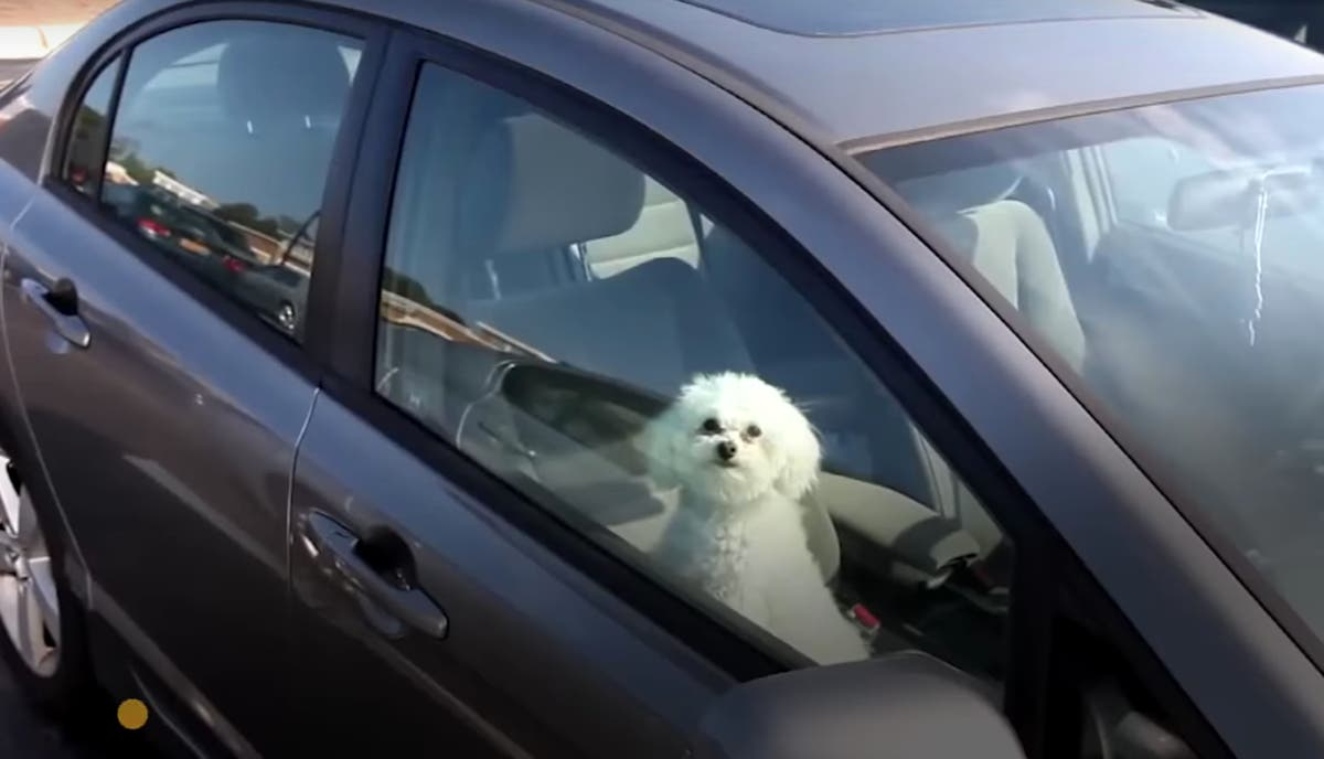 Dogs In Hot Cars: Think Twice Before Busting Window In