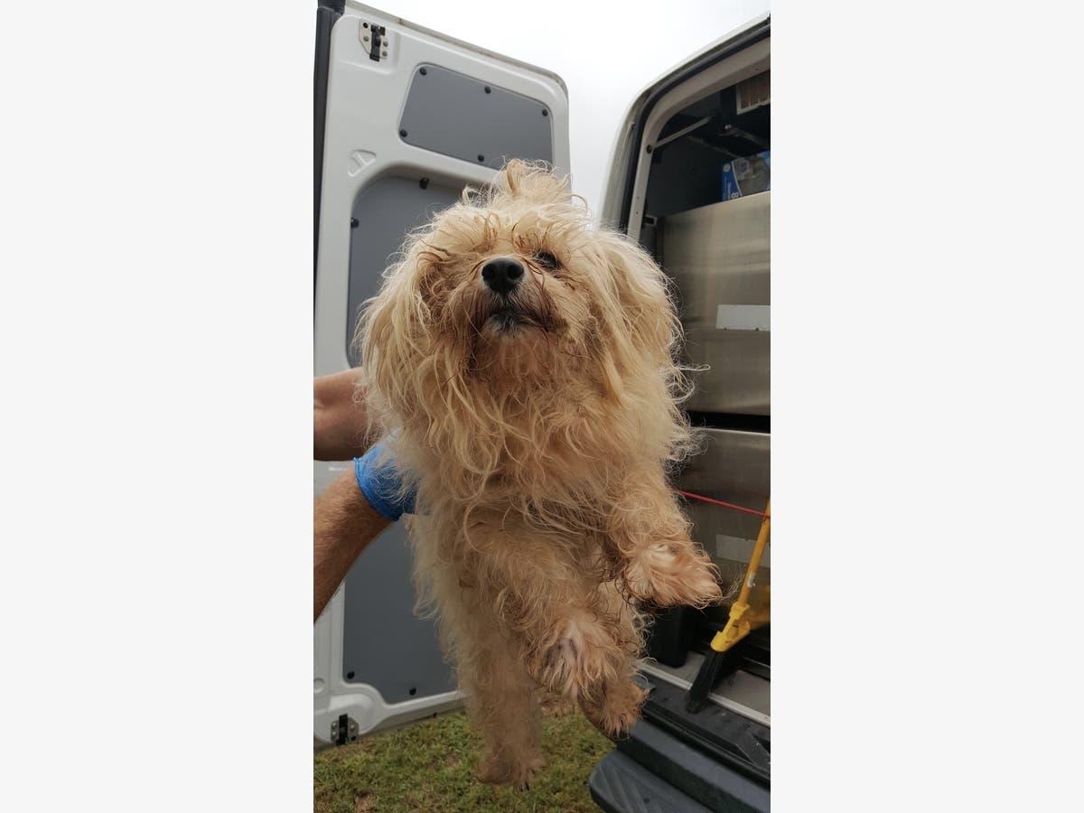 60 Sick Dogs Saved, 1 Found Dead In Puppy Mill Arrest