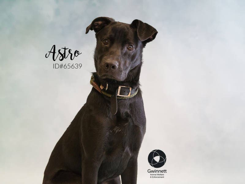 Astro: Worlds Most Un-Adoptable Dog, Or 47-Pound Goofball
