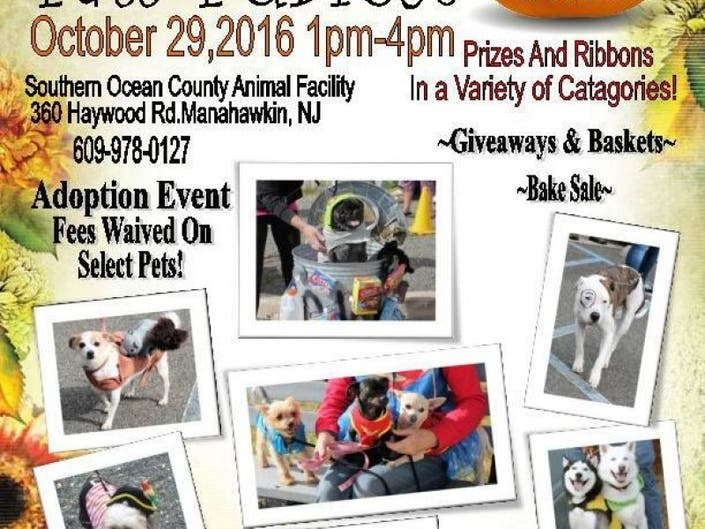 Come Celebrate 'Furfest' At The Southern Ocean County Animal