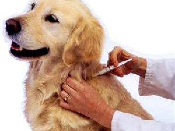 Free Rabies Clinic For Dogs And Cats In Cherry Hill ...