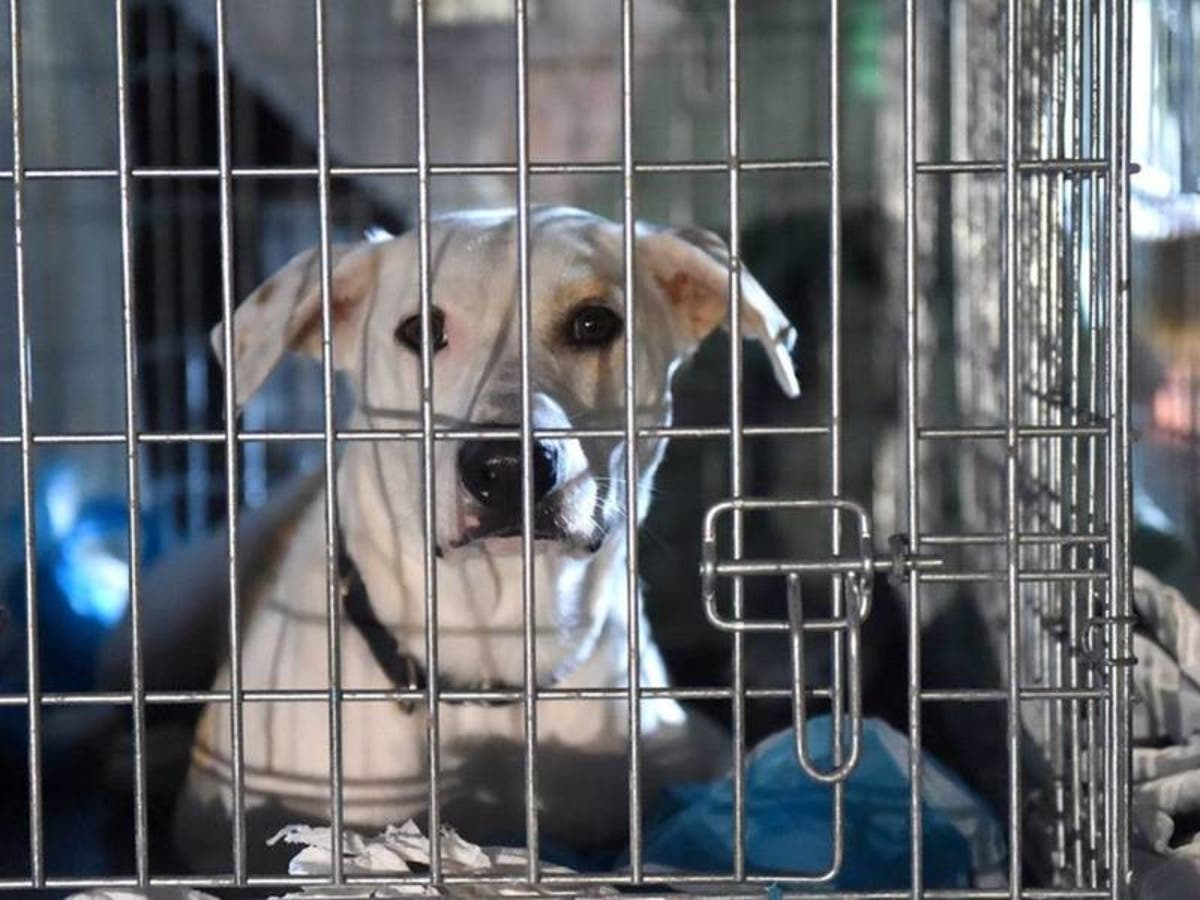 Moorestown Finalizes Puppy And Kitten Mill Pet Ban Moorestown Nj Patch