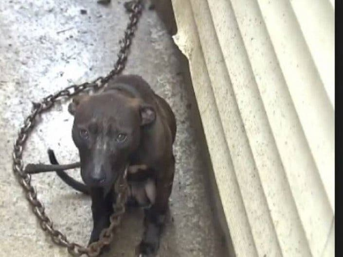 Man Sentenced In Dog Fighting Ring Involving 2 NJ Men: Feds